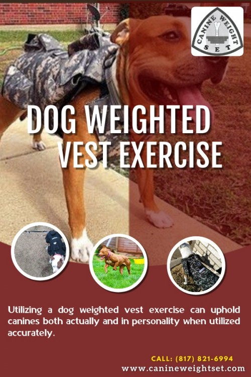 Dog-weighted-vest-exercise.jpg