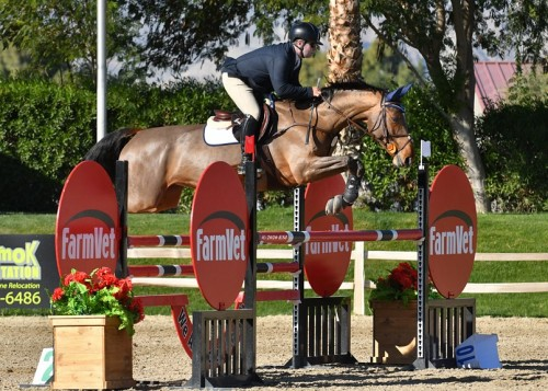 High-performance-jumper-horse-sale--Zeitgeist-Equestrian.jpg