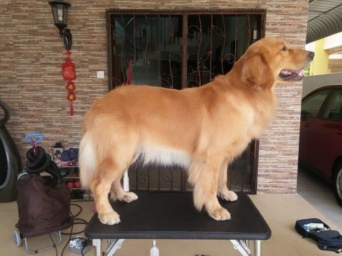 Groomers-for-Dogs---Awesome-Pawsome.jpg