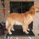 Groomers-for-Dogs---Awesome-Pawsome