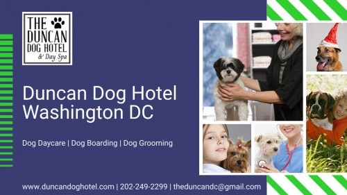 The Duncan Dog Hotel & Day Spa
