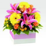 Shop-Premiun-Quality-Harlequin-Bright-Flowers-Online-in-PerthWA.png